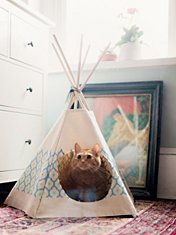 Royal Printed Cat Tipi
