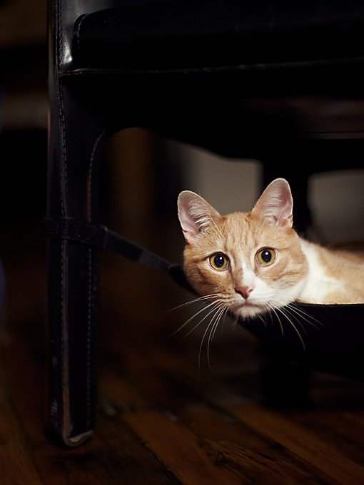 Cat Nap Hammock